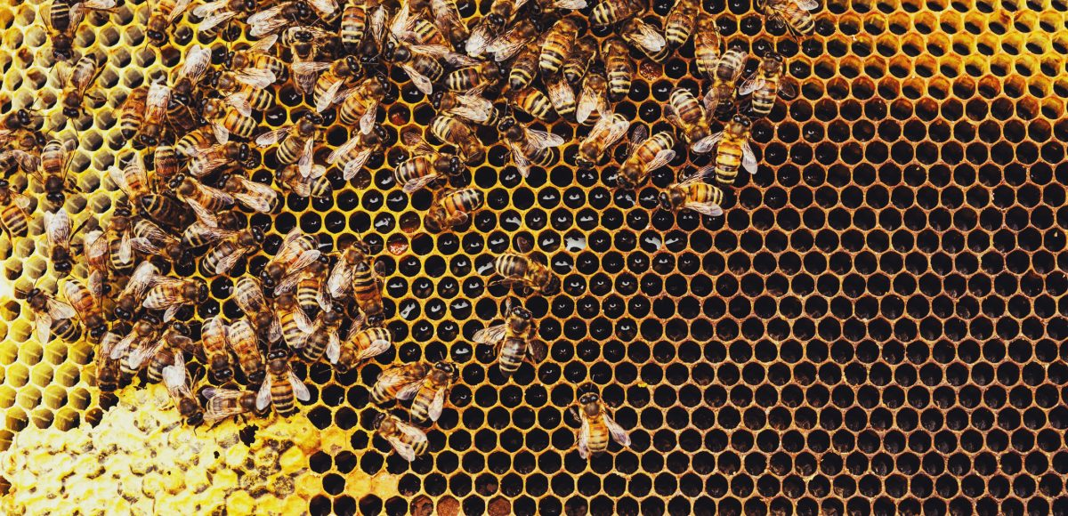Honeybees Make Your Numbers Count!